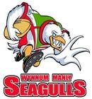 Wynnum Manly Seagulls